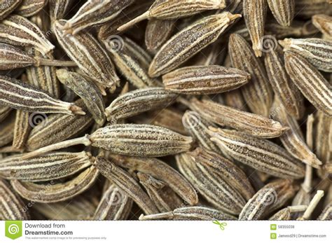 how seed are made background made of cumin seeds stock photo image 58355038