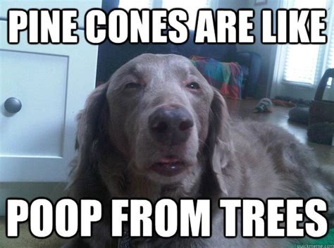 Funny What Memes - funny dog memes fun