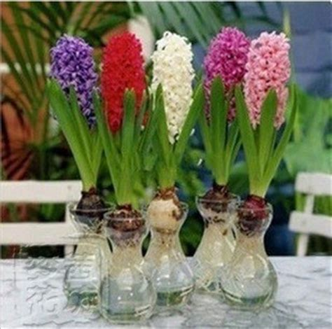 Am046 Limited Bunga Plastik Hias free shipping 22 kinds hyacinthus orientalis bulbs