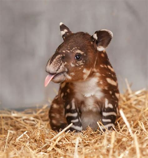 most adorable animals the most adorable baby animals of all time 35 pics