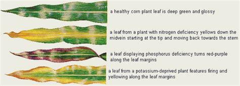 artificial sunlight l for plants artificial light for plants 100 images indoor plants