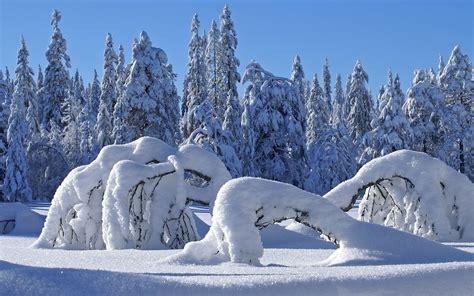 google wallpaper winter scenes no 235 l p 232 re no 235 l