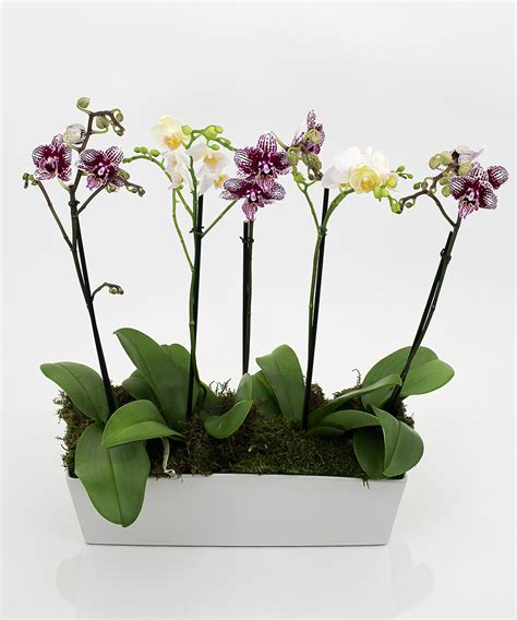 orchid delivery orchid planter same day delivery danvers ma currans