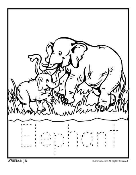 zoo animal templates az coloring pages