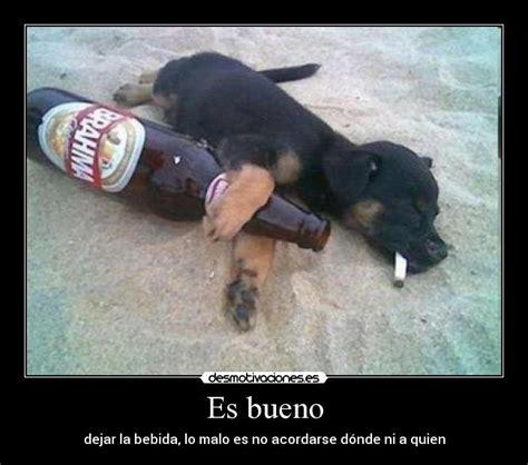 imagenes graciosas de animales borrachos memes de borrachos crudos