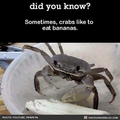 Crab Meme - funny animals tumblr