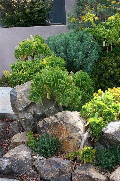 Rock Garden Succulents 17 Best Images About Rock Garden Ideas On Garden Ideas Boulder Retaining Wall And