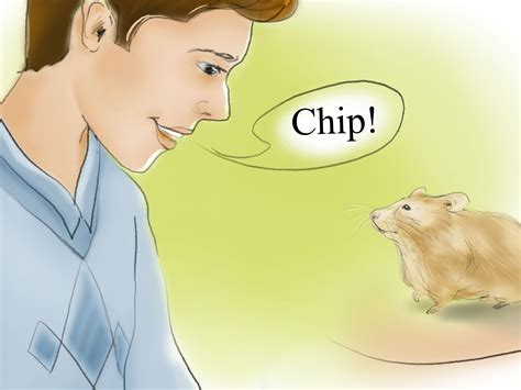 how to your to come to you how to your hamster to come when you call 12 steps