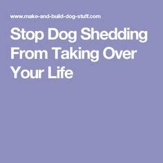 How To Stop Your From Shedding by 1000 Ideas About Shedding On Your
