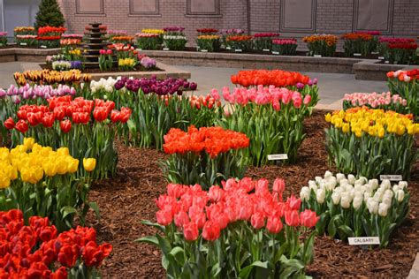 Flower Garden Show Flowers Everywhere At The Chicago Flower And Garden Show Coronado