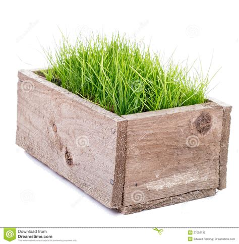 grass box green grass in wooden box royalty free stock photo image 27092135