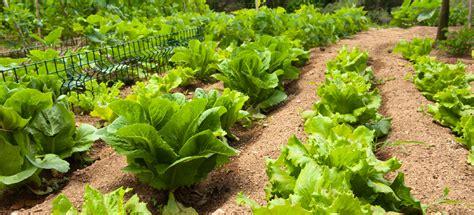 background vegetable starts van wingerden home