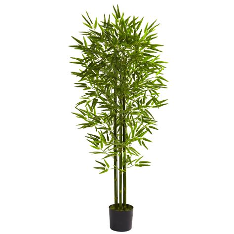 bamboo house plant a guide to growing bamboo indoors