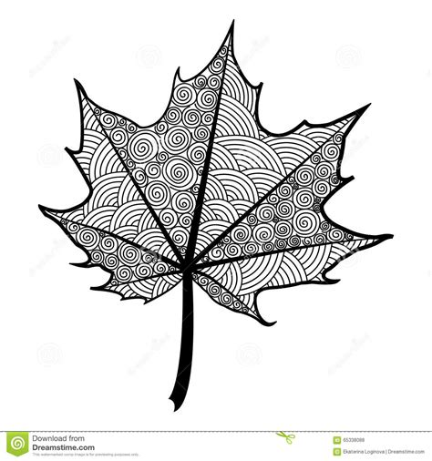 zentangle black and white leaf of the tree maple stock