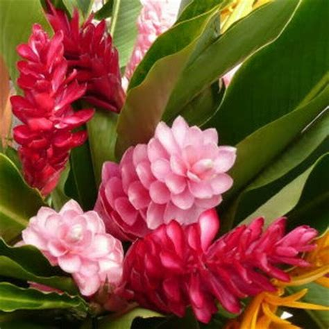 tropical plants with flowers escape to paradise tropical flowers