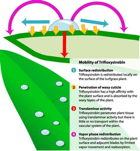 qoi strobilurin fungicides benefits and risks