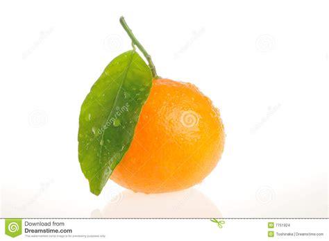 Orange Leaf Gift Card - orange with leaf stock images image 7751924