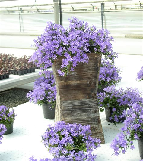 Best Plants For Hanging Planters by Top 10 Flowering Plants For Hanging Baskets
