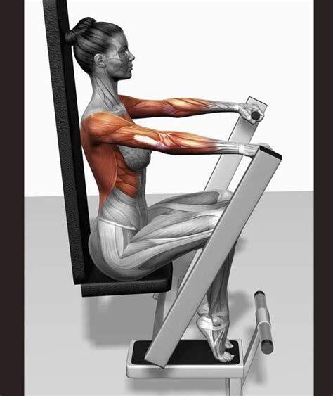 bench muscles lever bench press the muscles involved in this exercise