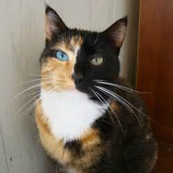 cats with different colored most beautiful cat pictures on stumbleupon