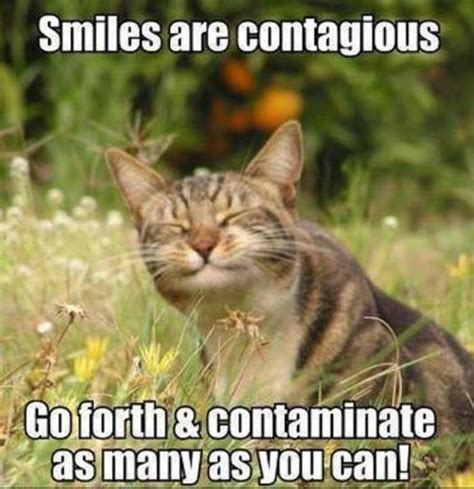 Smiling Cat friday 11 06 2017 it s national smile week the daily