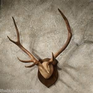 Elk Antler Mounting Ideas » Home Design 2017