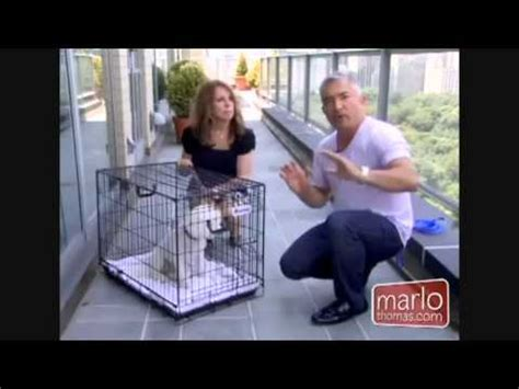 puppy screaming in crate crate cesar milan whisper