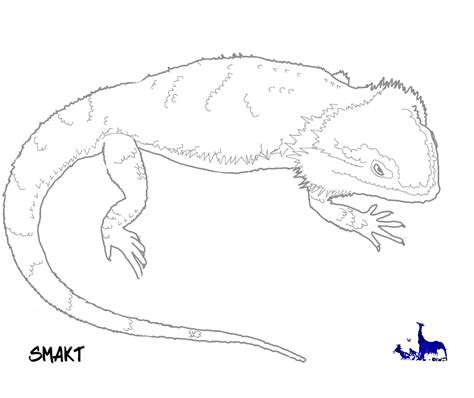 coloring page bearded dragon bearded dragon free coloring pages