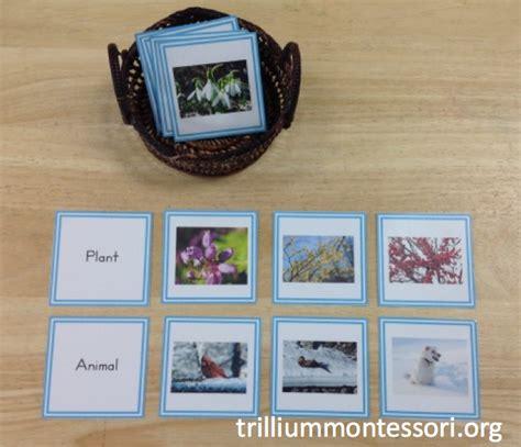 printable animal sorting cards january printables trillium montessori