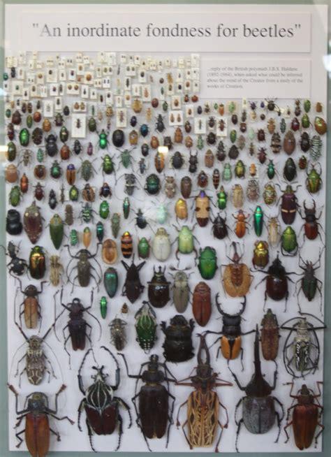oxford sketchbook a4 beetles67