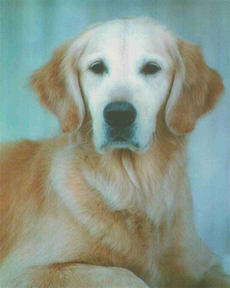 tick borne diseases in dogs tick borne disease faq