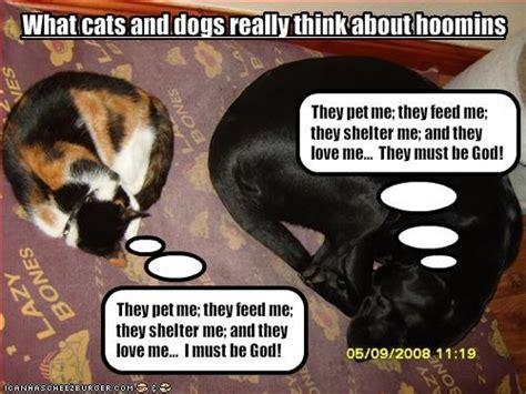 whos smarter cats or dogs whos smarter cats or dogs random answers fanpop