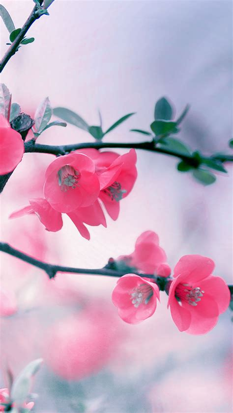 flower wallpaper for android phone vintage pink blossom flowers spring macro android