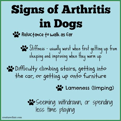 signs of arthritis in dogs arthritis in dogs seven ways you can ease the