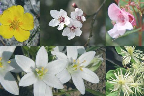 fiori di bach per neonati fiori di bach per bambini agitati naturopataonline
