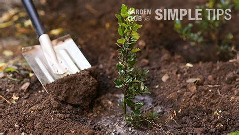 Best Time To Plant Garden by Fall Is The Best Time To Plant Trees And Shrubs Garden Club