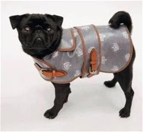 pugs in coats raoul s travels mulberry coats for pugs