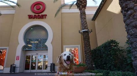 are dogs allowed in target walking at friendly orange county mall golden woofs