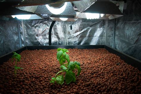 beginners guide  hydroponics updated glandore