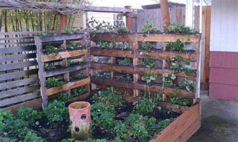 Vegetable Garden In Pallet Dishfunctional Designs God Save The Pallet Reclaimed