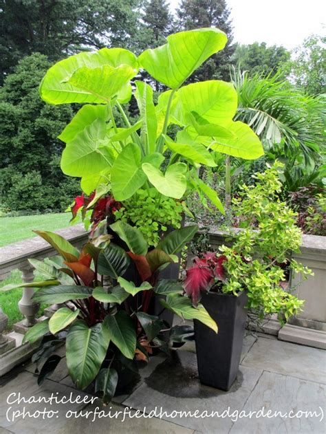 Patio Plant Containers 17 Best Images About Flower Pots On Pinterest Gardens