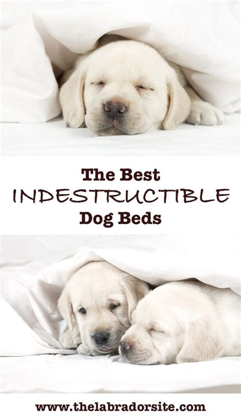 puppy chewing phase best indestructible beds for tough chewers