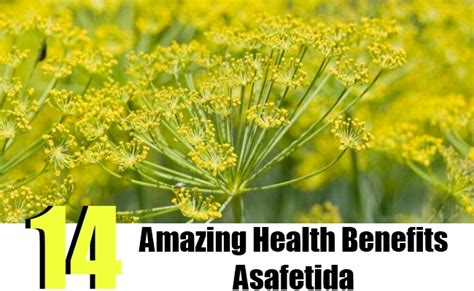 amazing health benefits asafetida search home remedy