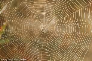 Spider Used Spider Webs Act Like Crime As Silk Contains Traces