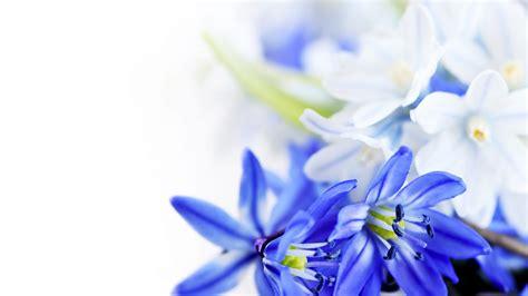 Blue Flowers by Blue Flower Weneedfun