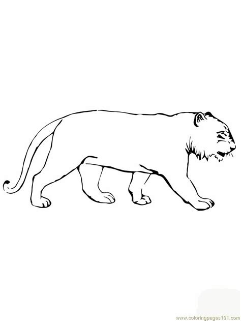 tiger without stripes coloring page coloring pages