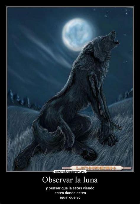 imagenes de lobos tristes im 225 genes y carteles de lobo pag 25 desmotivaciones