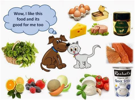 safe foods for dogs food for dogs cats a guide ottawa and health adviser