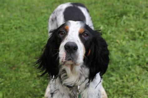 can dogs chocolate can dogs eat chocolate seedmeds health wellness