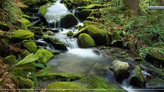 Roaring Fork Cascade At Roaring Fork In April Great Smoky Mountains